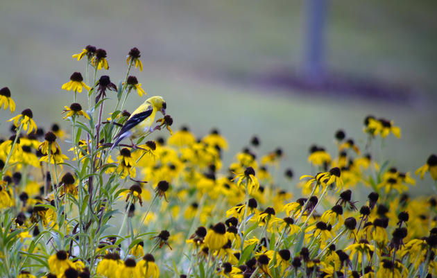 Plants for Birds