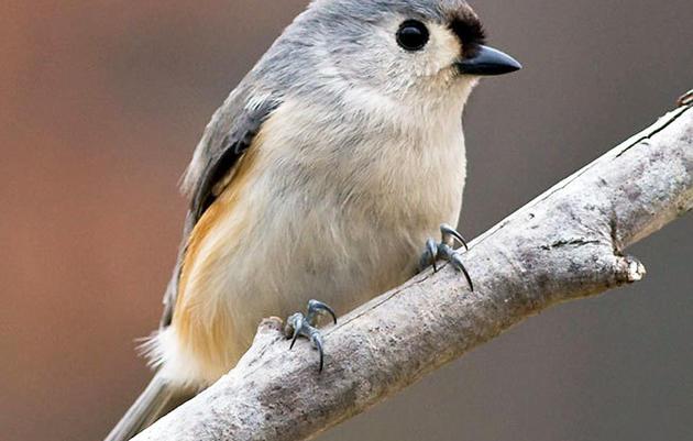 Bird-feeding Basics