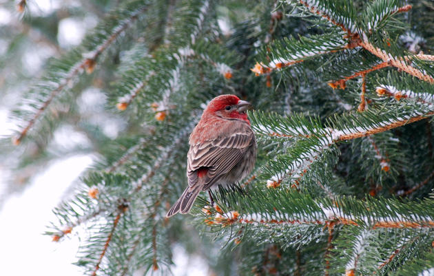 Audubon Texas Talks Christmas Bird Counts in Austin