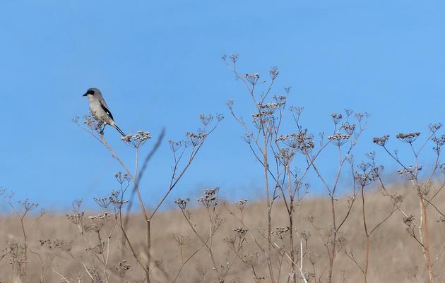 Prairie & Grassland Conservation