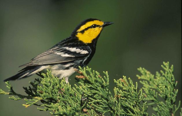 Texas Audubon Chapters