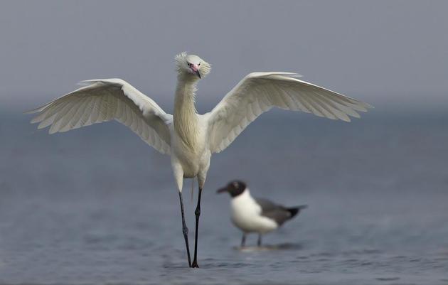 Bird and Wildlife Resources