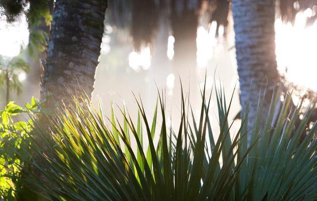 Sabal Palm Audubon Sanctuary