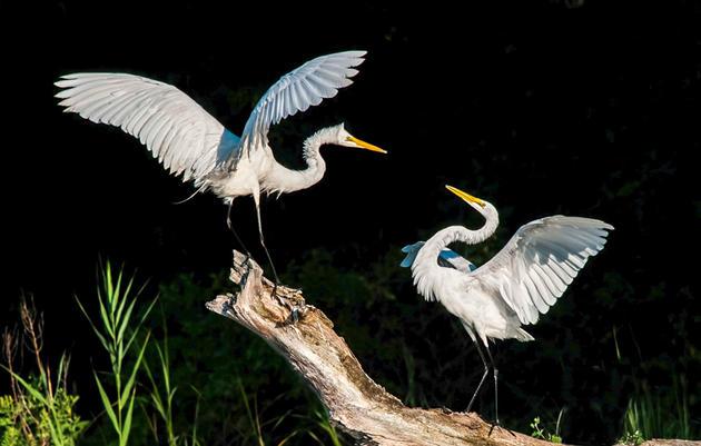 National Audubon Society Opposes Loss of Important Bird Habitat Because of Border Wall