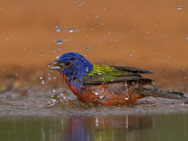 Audubon Texas and Texas Parks and Wildlife Department Launch Bird City Texas Certification Initiative