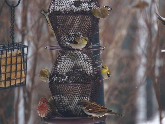 Bird-friendly Backyards
