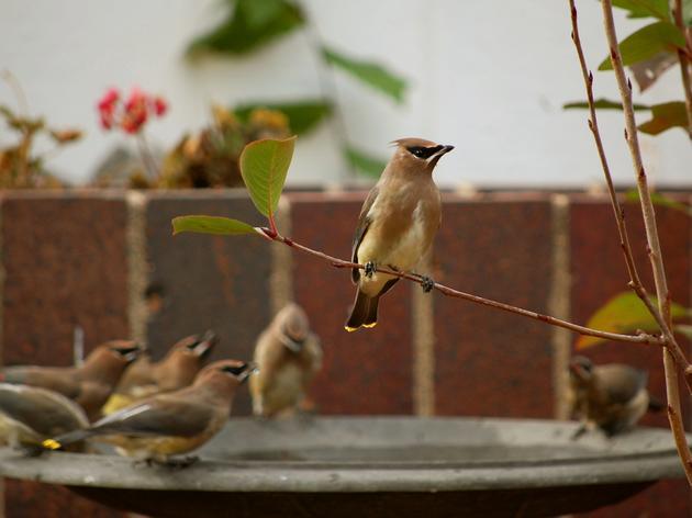 Bird-friendly Communities