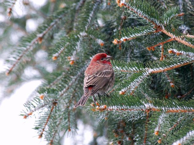 Audubon Texas Talks Christmas Bird Counts in Austin