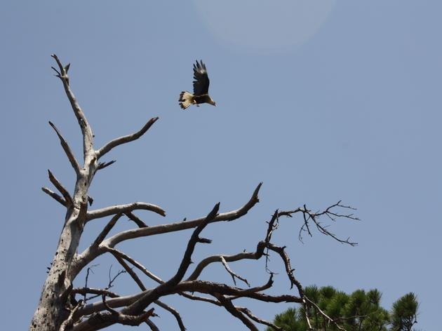 Texas Audubon Chapter Assembly Program & Session Details