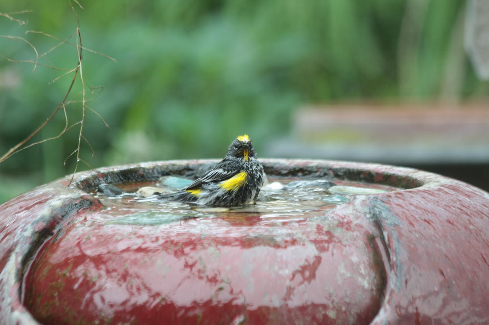 bird friendly backyards audubon texas