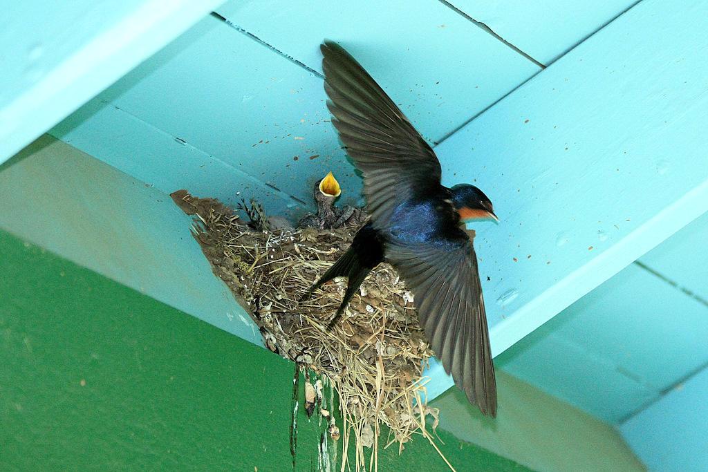 Injured, Sick or Orphaned Birds & Wildlife | Audubon Texas