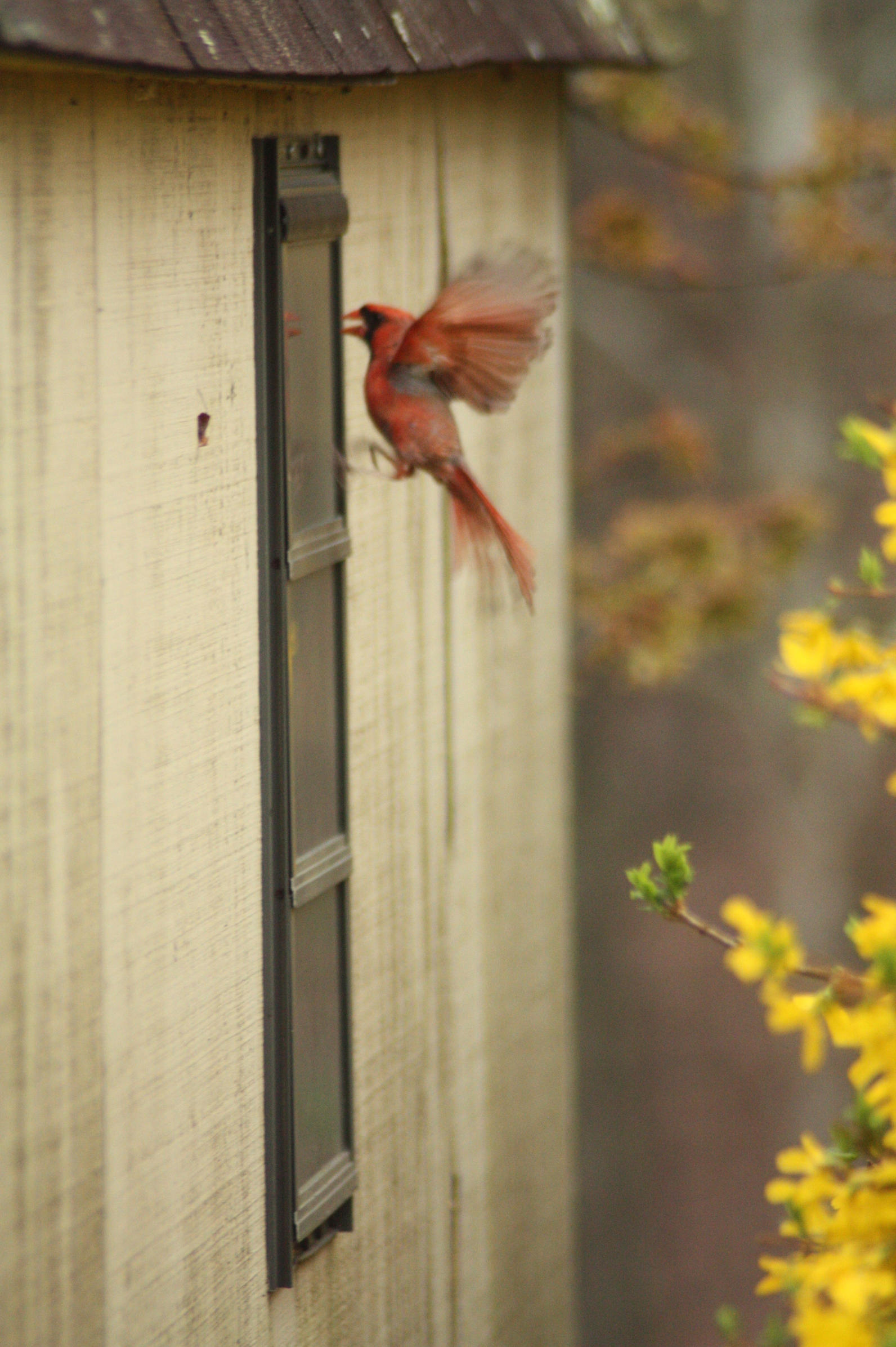 Injured Sick Or Orphaned Birds Amp Wildlife Audubon Texas