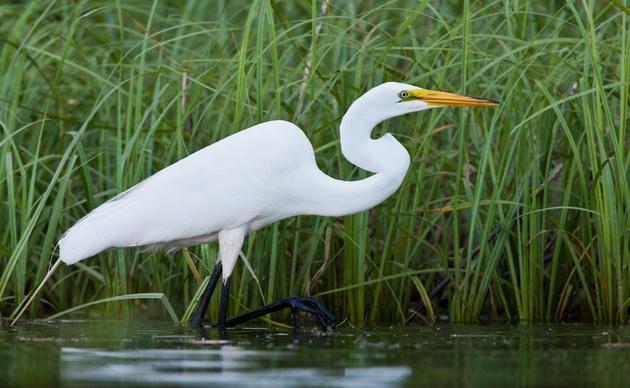 eBird | Audubon Texas